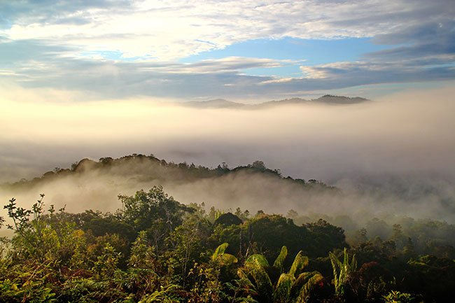Misty Jungle in Borneo