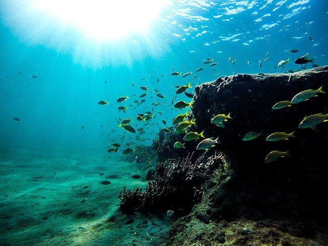 Snorkling in Australia