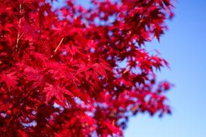 Autumn Holidays in Japan