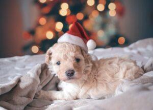 large dog friendly holidays at Christmas