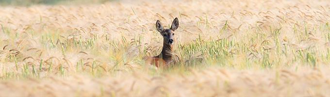 wildlife watching banner