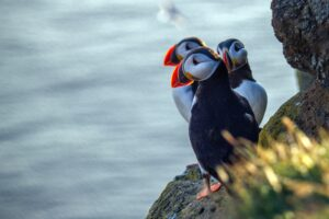 wildlife watching tour in Pembrokeshire