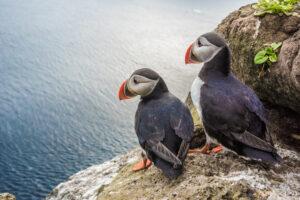 Unusual staycation ideas on lundy island